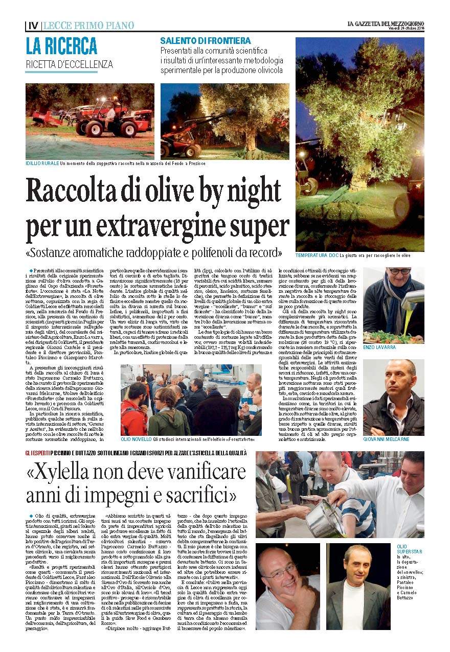 Raccolta olive by night